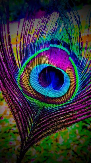 Обои на телефон павлин, перья, перо, peacock feathers
