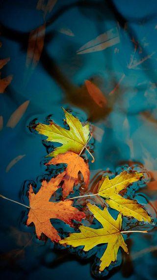 Обои на телефон осень, природа, прекрасные, листья, времена года, вода