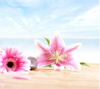 Обои на телефон лето, цветы