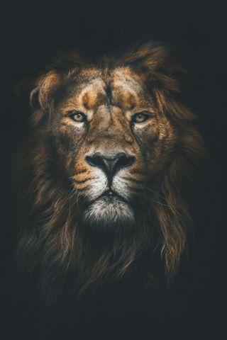 Обои на телефон лев, король, land