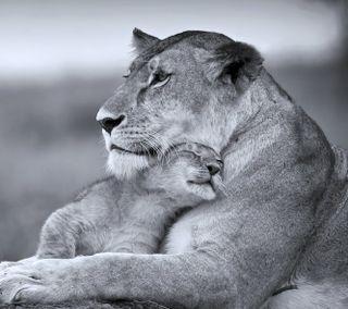Обои на телефон мама, лев, коты, son