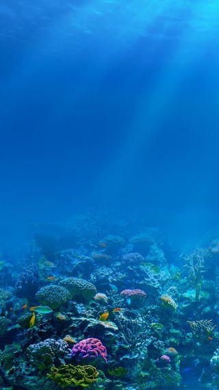Обои на телефон глубокие, природа, подводные, океан, море, hd, 1080p