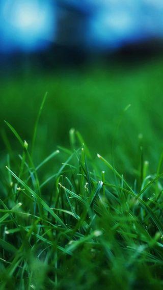 Обои на телефон макро, трава, природа, зеленые