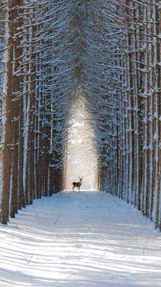 Обои на телефон олень, снег, путь, лед, зима, дерево