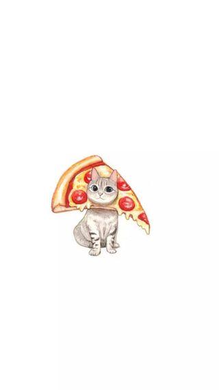 Обои на телефон пицца, милые, кошки, забавные, tumblr, pizzacat