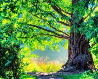 Обои на телефон восход, природа, листья, лето, лес, дерево, весна, oak tree