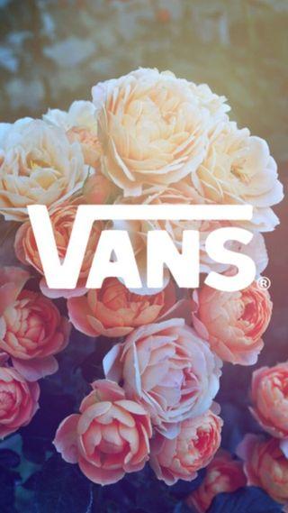 Обои на телефон цветы, красые, белые, vans