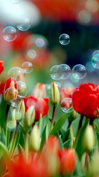 Обои на телефон тюльпаны, пузыри, лето, красые, красота