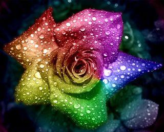 Обои на телефон капли дождя, цветы, цветные, радуга, мокрые, красочные, капли воды, капли, multicolor flower