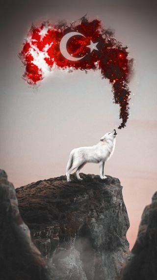 Обои на телефон турецкие, волк, белые, white wolf, beyaz kurt