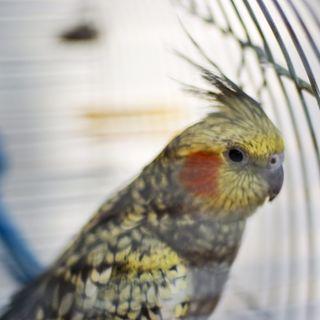 Обои на телефон попугай, питомцы, cage