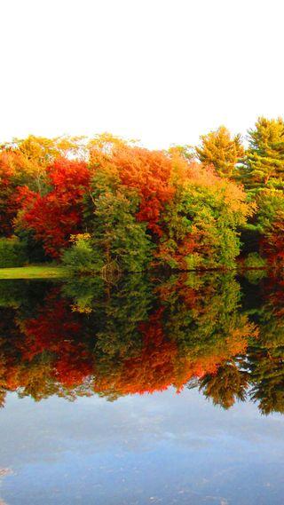 Обои на телефон озеро, осень, листья, fall leaves, fall autumn