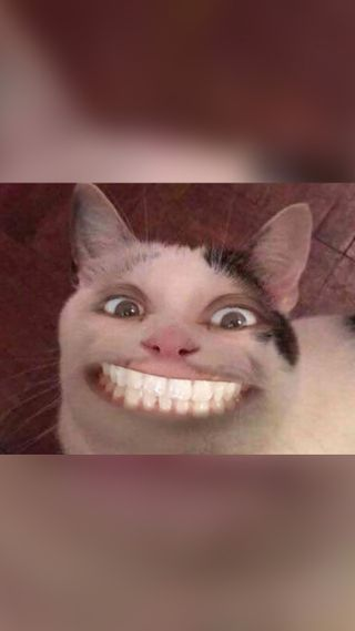 Обои на телефон мем, страшные, смайлики, новый, найк, кошки, жуткие, supreme, nike, creepy cat