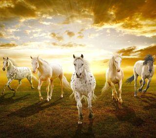 Обои на телефон лошадь, лошади, животные