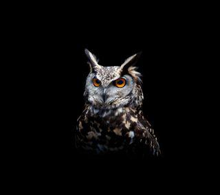 Обои на телефон сова, птицы, ночь