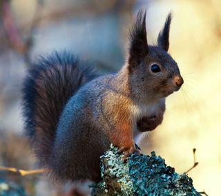 Обои на телефон маленький, животные, белка, rodent, nut, chipmunk