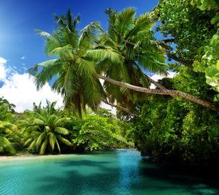 Обои на телефон рай, тропические, синие, пальмы, изумруд