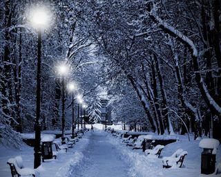 Обои на телефон снежные, сад, природа, огни, ночь, зима