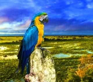 Обои на телефон попугай, синие, река, желтые, бразилия, macaw, blue yellow amazon kakdua