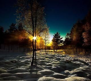 Обои на телефон утро, солнце, снег, зима, дерево, восход