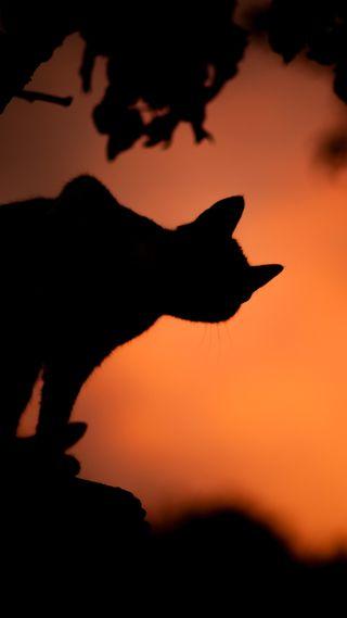 Обои на телефон ужасные, черные, хэллоуин, ужасы, страшные, кошки, zedgehallow18