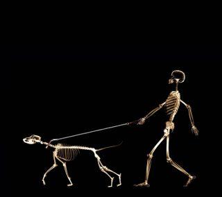 Обои на телефон прогулка, темные, собаки, скелет, луч, кости, забавные, x-ray, roentgen, dog walker