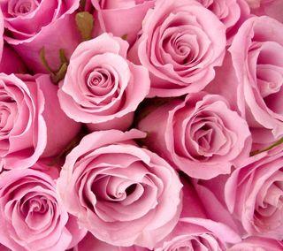 Обои на телефон розы, розовые, галактика, galaxy nexus