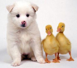 Обои на телефон щенки, милые, cute puppy, 2160x1920