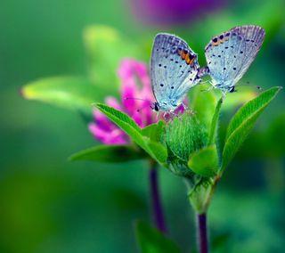 Обои на телефон цветы, природа, пейзаж, зеленые, естественные, бабочки, uhd, hd, 4k