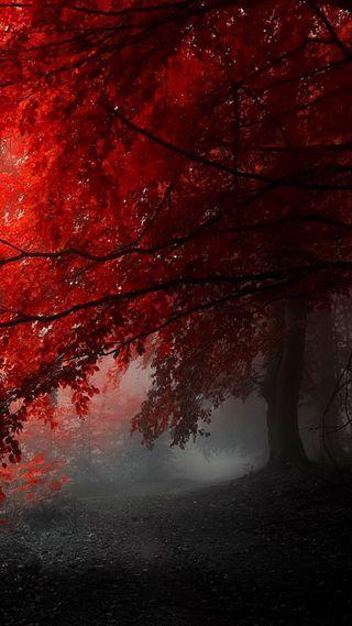 Обои на телефон туман, черные, серые, природа, красые, дерево, foggyred poplar