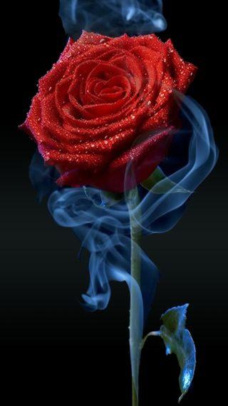 Обои на телефон лепестки, цветы, розы, новый, крутые, красые, дым, дизайн, арт, абстрактные, art