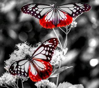 Обои на телефон день, новый, красые, бабочки, new day