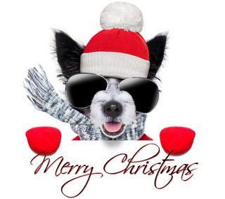Обои на телефон очки, фон, собаки, рождество, милые, крутые, cute cool, christmas dog glasses, christmas dog