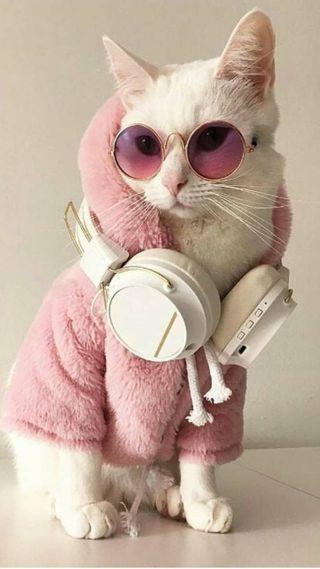 Обои на телефон стильные, коты, стиль, мяу, милые, кошки, stylish cat, cat wallpaper