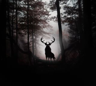 Обои на телефон dark forest, deer in forest, темные, лес, олень
