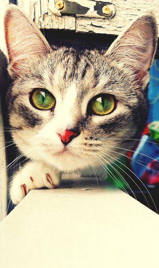 Обои на телефон кошки, котята, зеленые, животные, глаза, green eyes