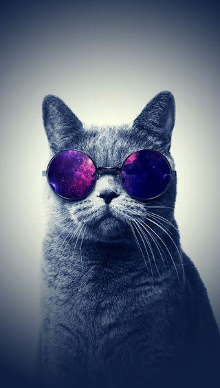 Обои на телефон питомцы, эпл, фан, счастливые, стекло, очки, крутые, кошки, забавные, животные, hd, happy, cool cat glasses, apple