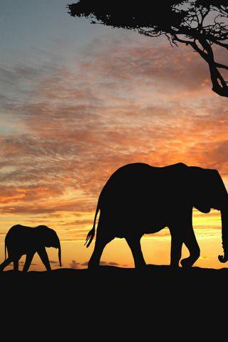Обои на телефон слон, питомцы, малыш, лес, закат, животные, дикие, арт, baby elephant, art
