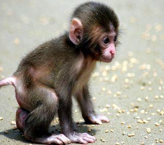 Обои на телефон обезьяны, -----------