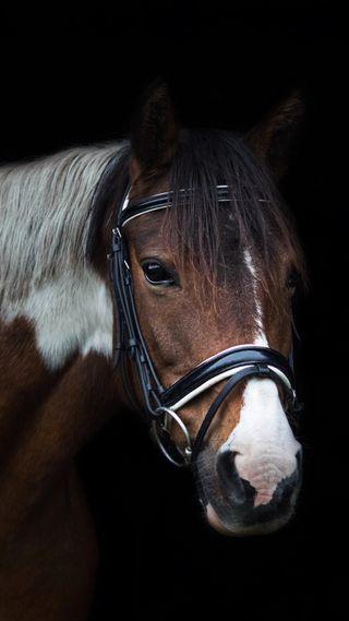 Обои на телефон лошади, ультра, приятные, прекрасные, лошадь, hd, 4k