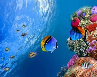 Обои на телефон подводные, тропические, рыби, кораллы