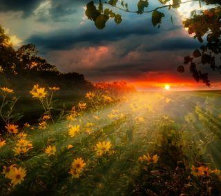 Обои на телефон поле, цветы, природа, пейзаж