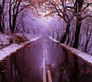 Обои на телефон природа, зима, дорога