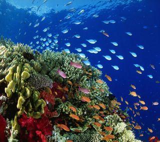 Обои на телефон подводные, цветные, рыба, кораллы, вода