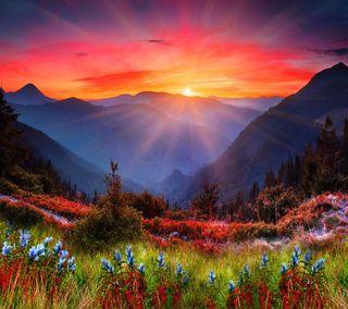 Обои на телефон цветы, закат, горы, солнце, трава, растения, сцена