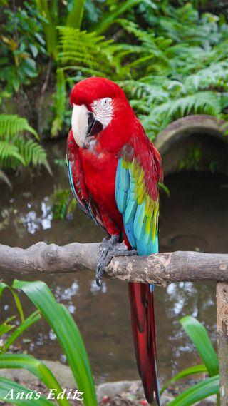 Обои на телефон попугай, птицы, зоопарк, дикая природа, macaw