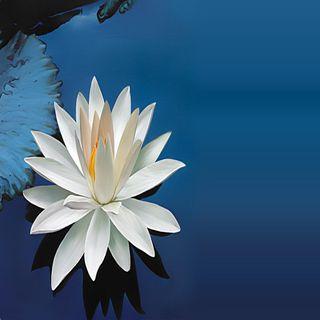 Обои на телефон лепестки, цветы, приятные, прекрасные, милые, лилия, взгляд, lily flower petals