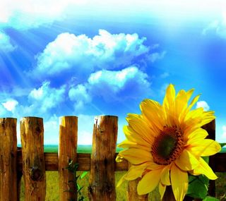 Обои на телефон подсолнухи, цветы, солнце, природа, облака