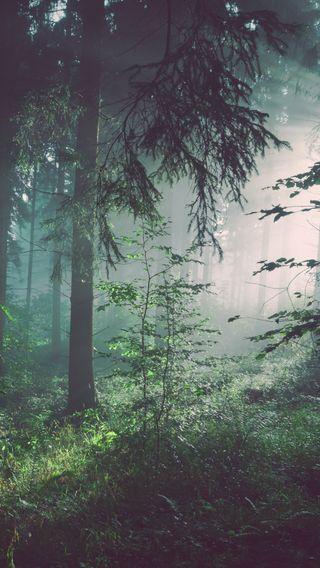 Обои на телефон лес, деревья, солнечный свет