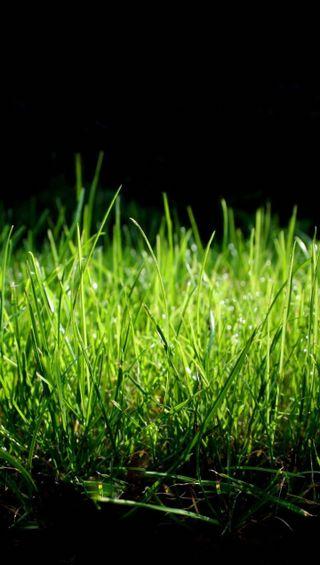 Обои на телефон макро, трава, грани, s6, qhd, grass macro qhd, 1440x2560